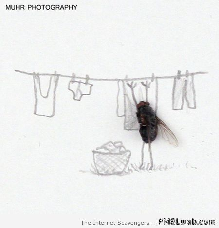 dead fly doing laundry at PMSLweb.com