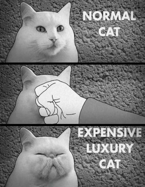 Luxury cat just one punch away