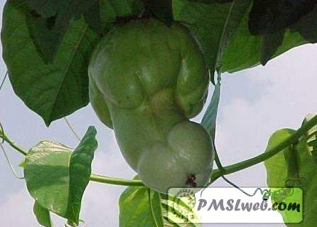 sexual fruit