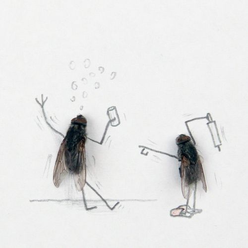 gender fly art