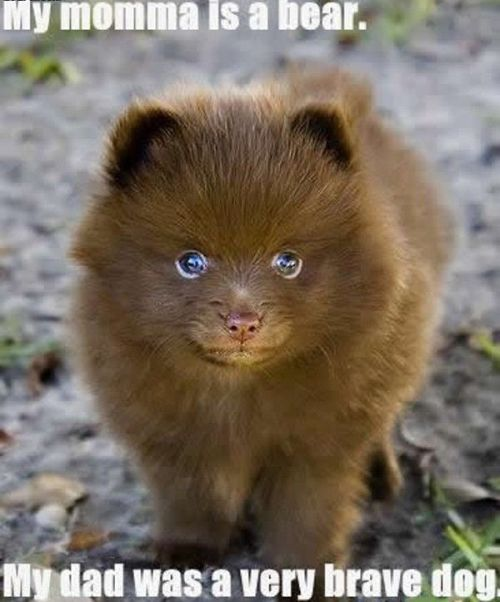 a cross between a dog and a bear maybe