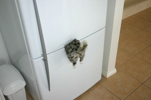 nasty cat fridge magnet