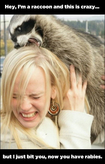 raccoon bites you and gives you rabies funny