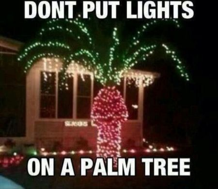 don't put lights on a palm tree