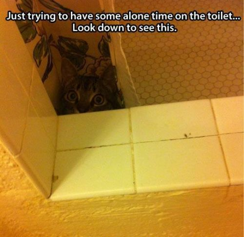 just trying to have some alone time in the toilet cat funny