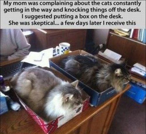 my mom was complaining cat funny