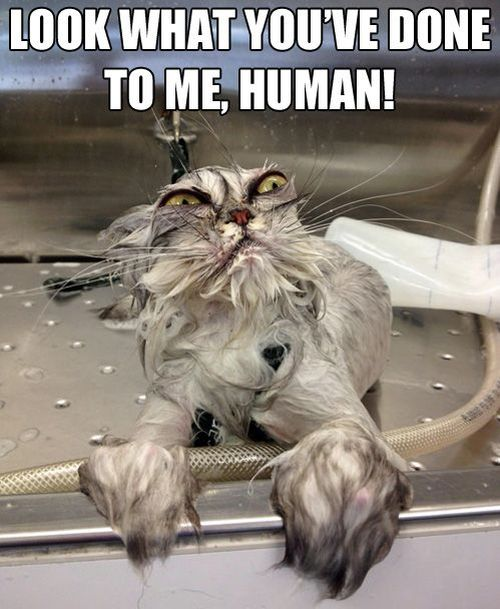 look what you've done to me human!