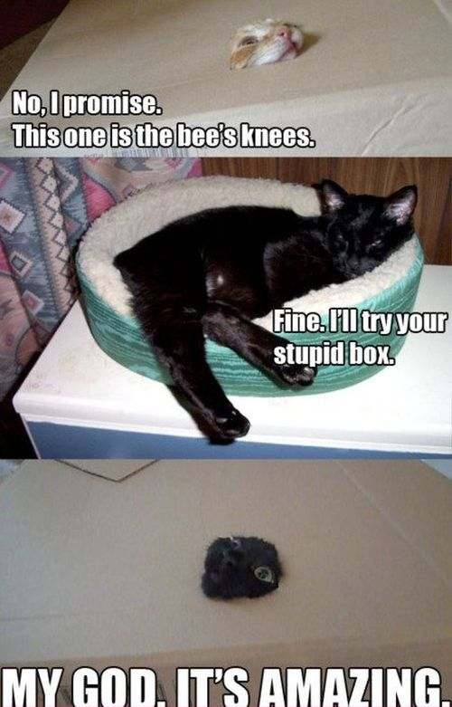 my god the box is amazing cat funny