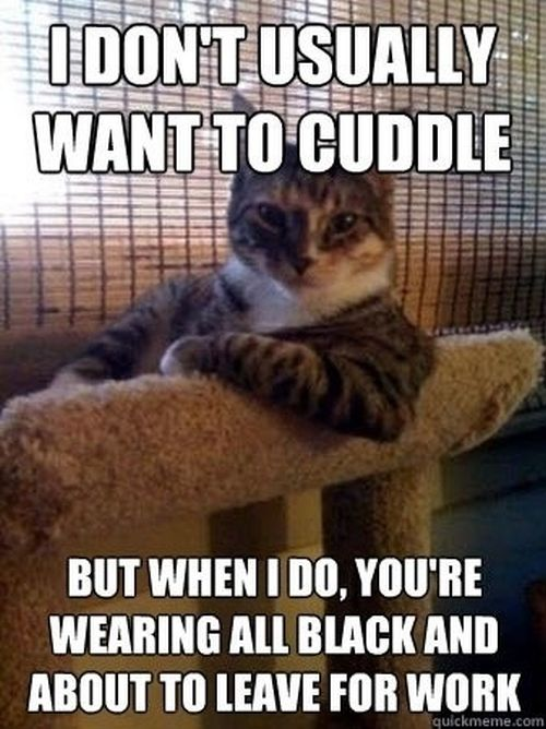 I don't usually want to cuddle cat meme