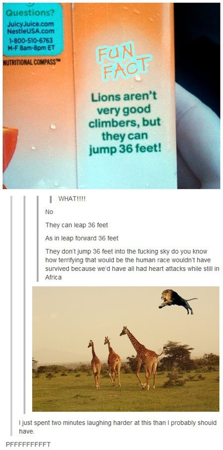 Lions can jump 36 feet funny