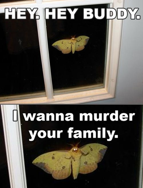I want to murder your family - moth funny