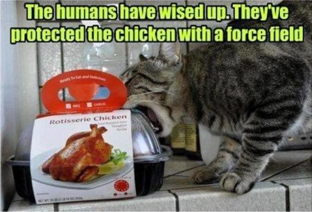 They've protected the chicken by  a force feel