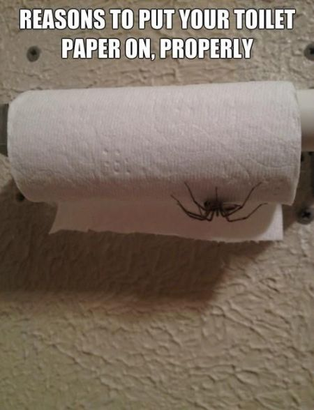 reasons to put your toilet paper on properly