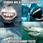 sharks are a lot friendlier without sharp teeth