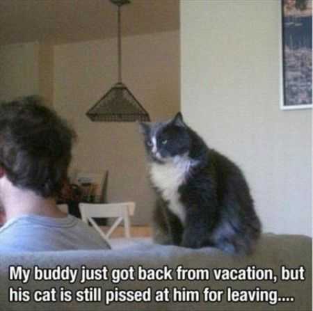 Cat pissed at his owner funny