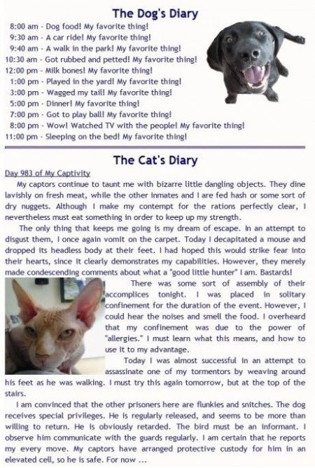 the dogs diary versus the cats diary