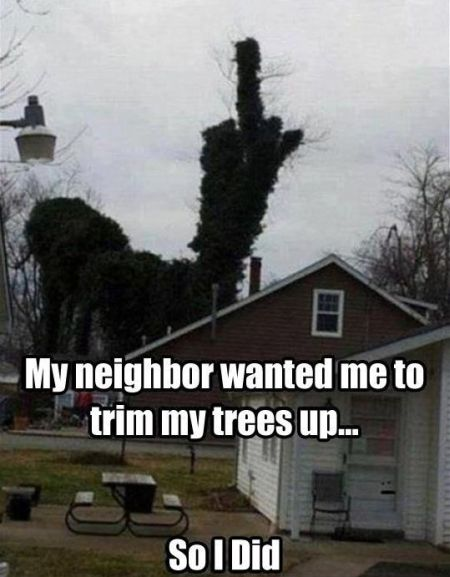 my neighbor wanted me to trim my trees up funny