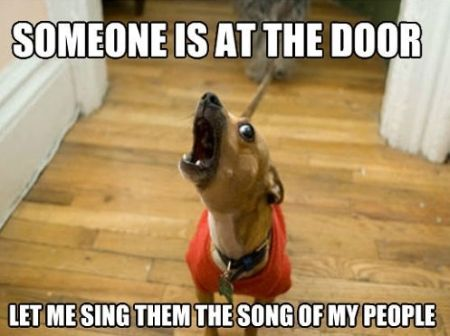 someone is at the door dog meme