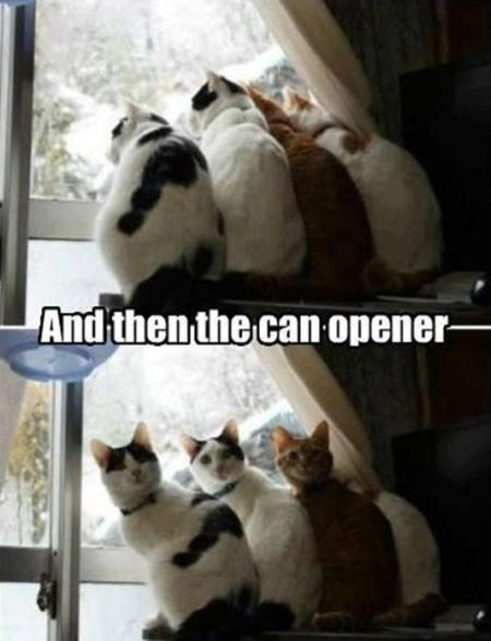 and then the cat opener funny