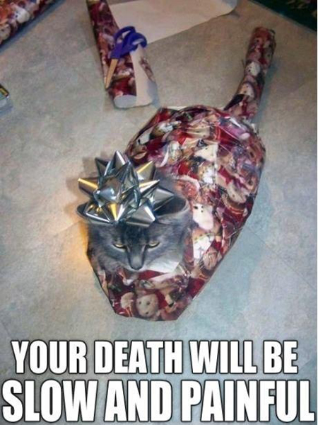 cat meme your death will be slow and painful