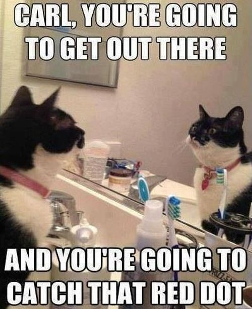 carl you're going to get out there cat funny