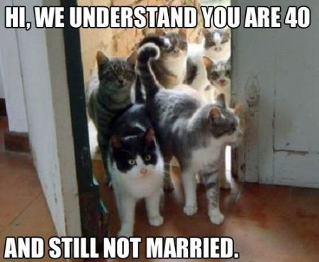 we understand that you are 40 and still not married -cat funny