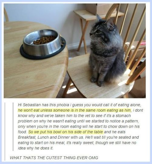 story of sebastian the cat and his food phobia