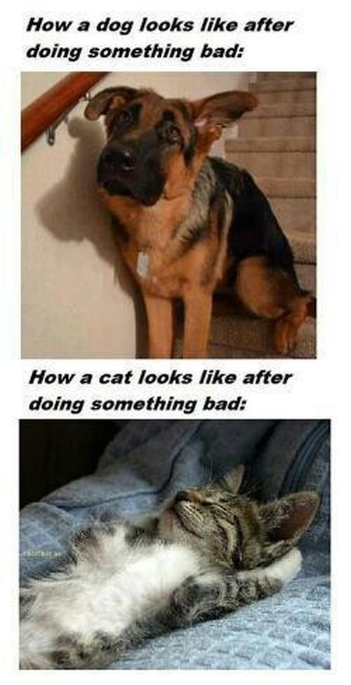 how a cat looks after doing something bad