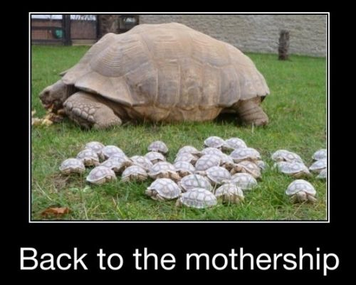 back to the mothership turtle funny