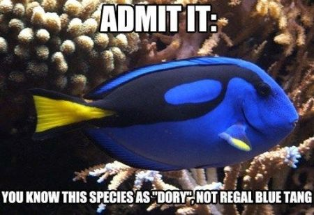 Admit it you know this species as dory