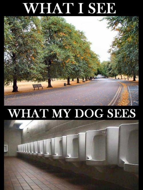 how my dog sees the park