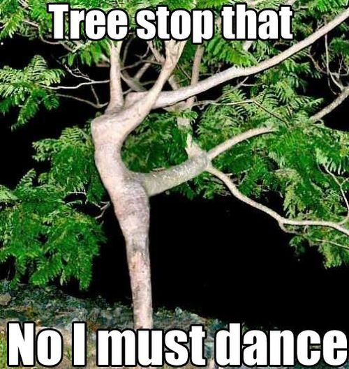 Tree stop that, no I must dance