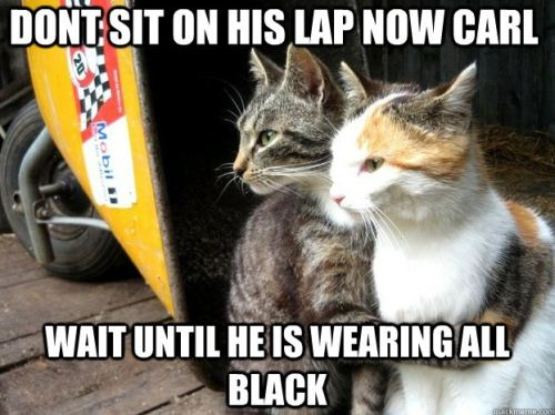 don't sit on his lap now carl - cat funny
