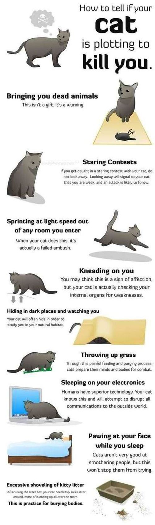 how to tell if your cat is plotting on killing you