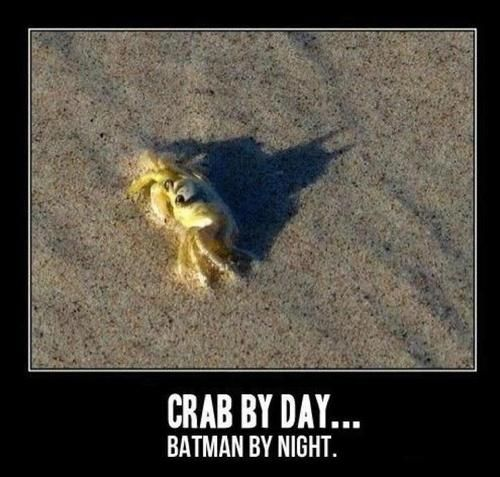 crab by day batman by night