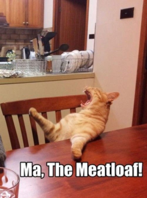 Ma the meatloaf funny cat