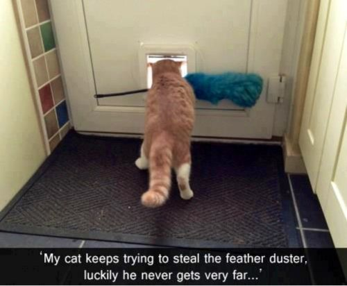 cat trying to steal the feather duster