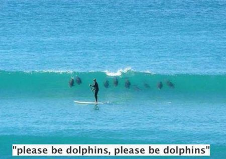 Please be dolphins funny