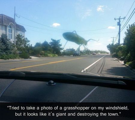 grasshopper on windshield funny picture