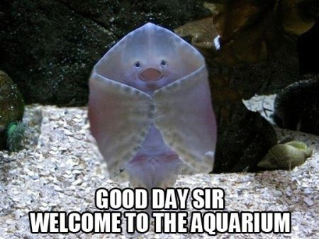 good day sir welcome to the aquarium funny
