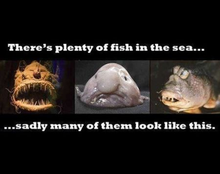 there's plenty of fish in the sea funny