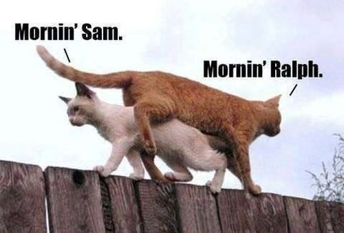two cats cross on fence