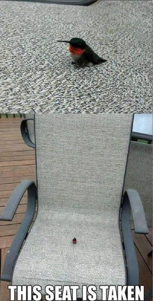 this seat is taken bird funny