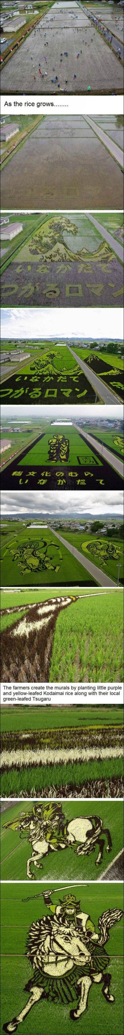 Rice fields art