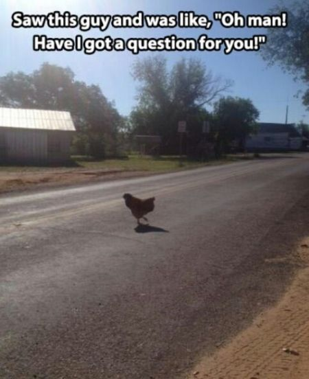 chicken crossing the road funny picture
