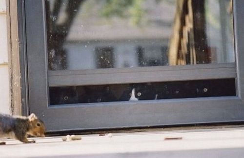 funny cats watching squirrel out the window