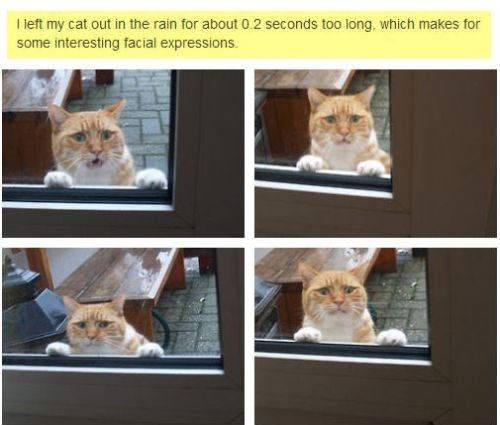 cat outside for too long funny