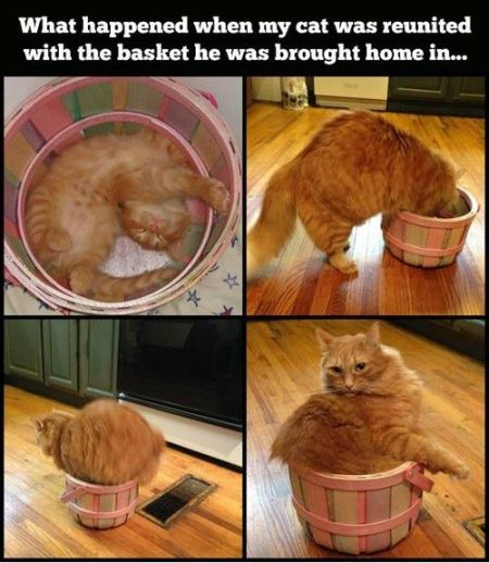 What happened when my cat was reunited with the basket