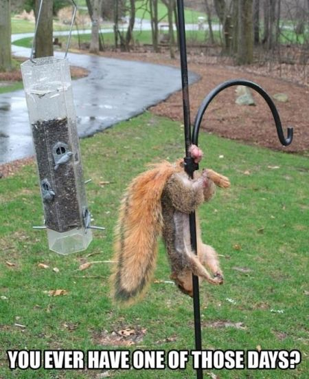 You ever have one of these days squirrel funny