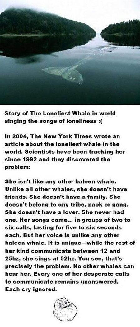 story of the loneliest whale in the world